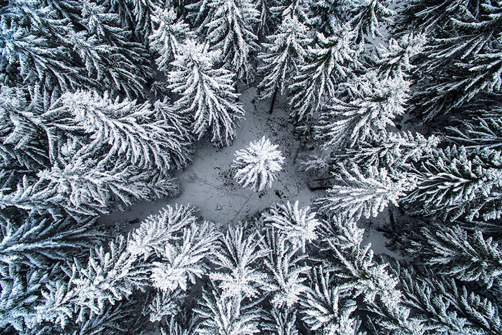 In the Middle of the Winter Forest