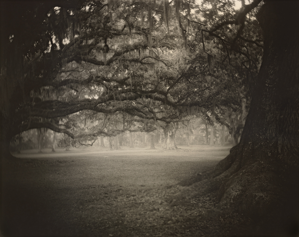 Deep South, Untitled, 1998 (Fontainebleau)