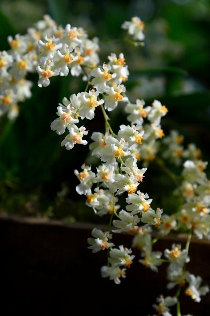 Exposition Mille et une Orchidées