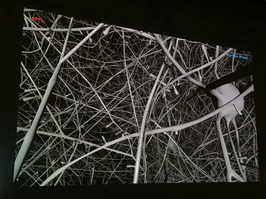 Exposition Neurones