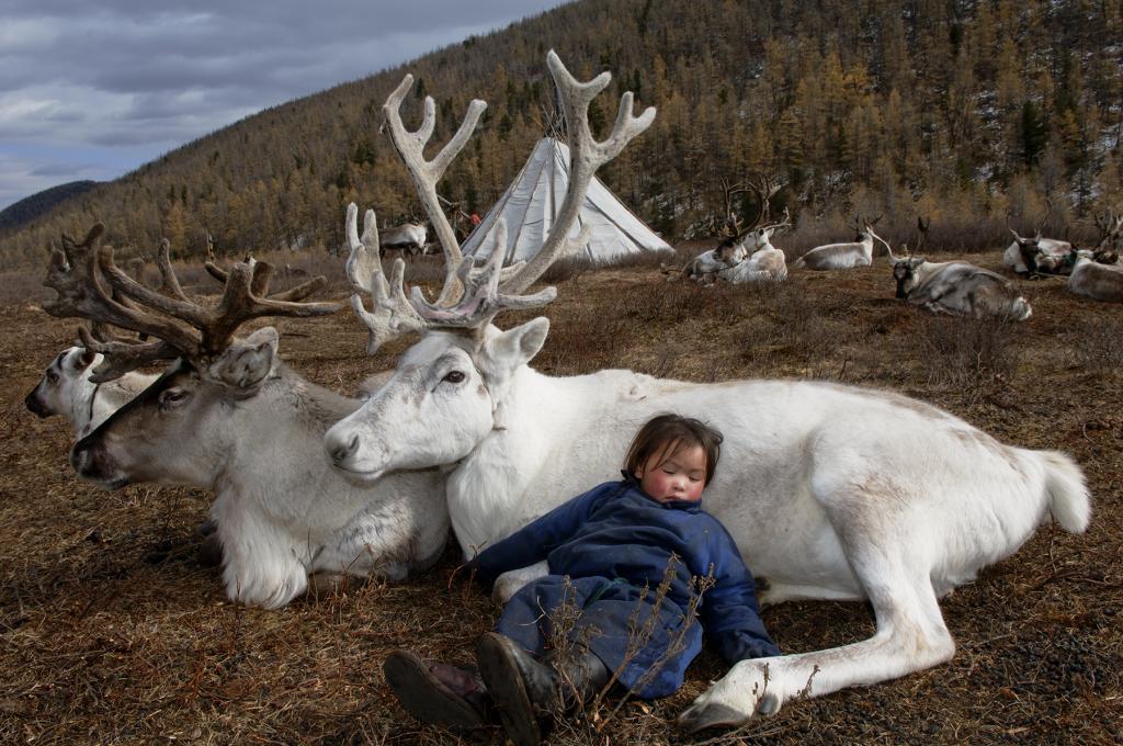 Hamid Sardar, Deer Totem - West Taiga, Mongolia