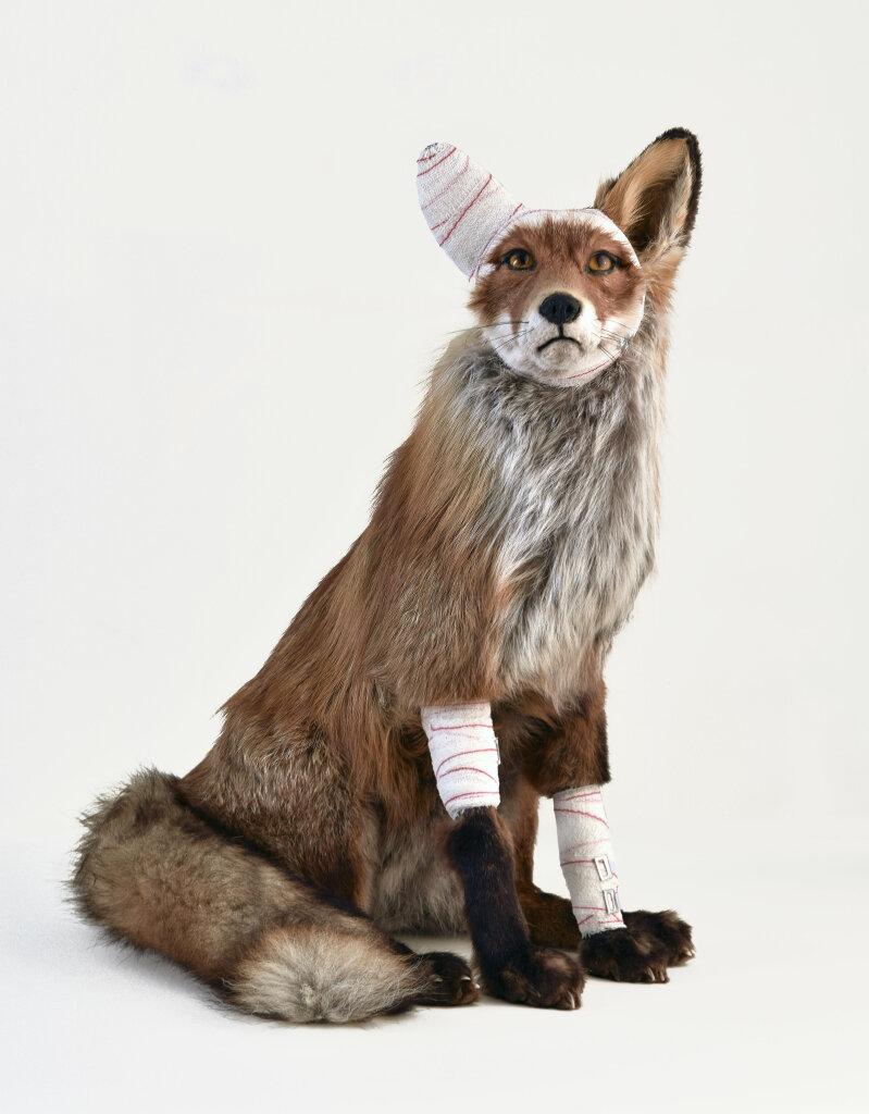 Pascal BERNIER, Accident de chasse (renard), Collection Fondation Villa Datris