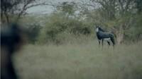 Kiluanji Kia Henda, Havemos de Voltar (We Shall Return), [Film Still], 2017 (2) (Chine Afrique Pompidou)