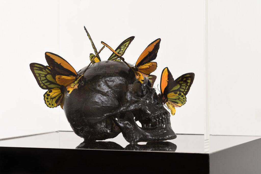 Musée en Herbe - Araignées, lucioles et papillons