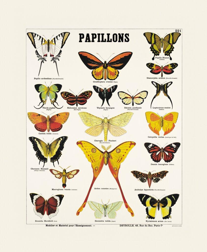 Papillons - Collection - Exposition Araignées, lucioles et papillons - Musée en Hebre