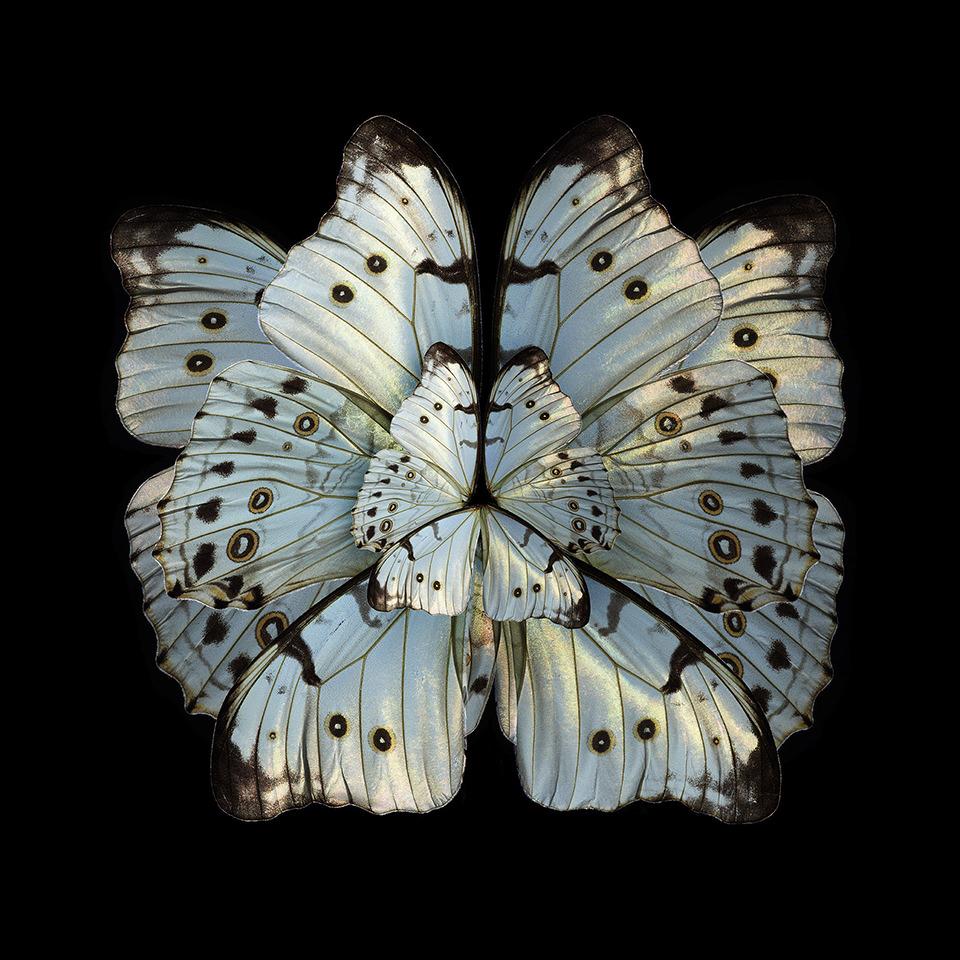 Seb Janiak - Mimesis - Hibiscus Trinium, 2012