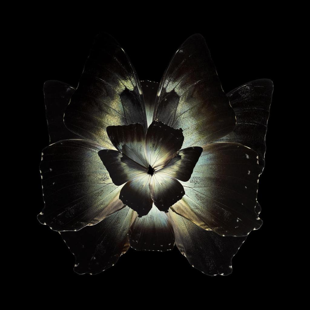 Seb Janiak - Mimesis - Tradescantia Ganymedia, 2012
