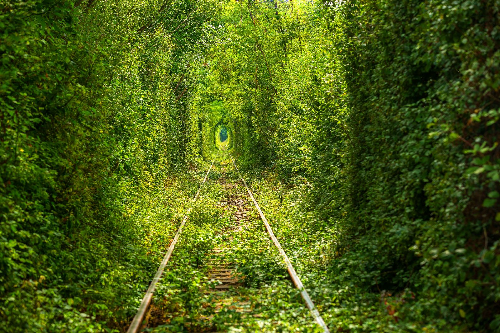 Le tunnel de l'amour en Ukraine | Arts in the City