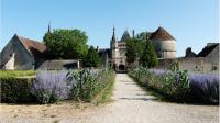 Allée menant au Château de Talcy