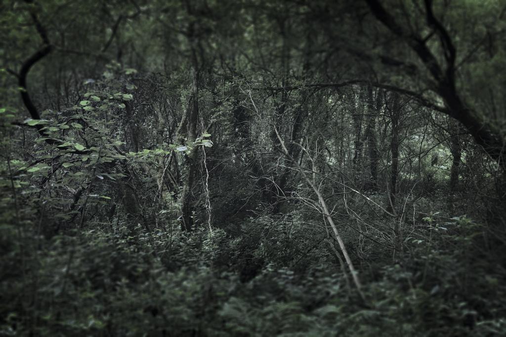 Anne-Lise Broyer, Réveil du vert