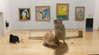 Gerbil Art Gallery (1)