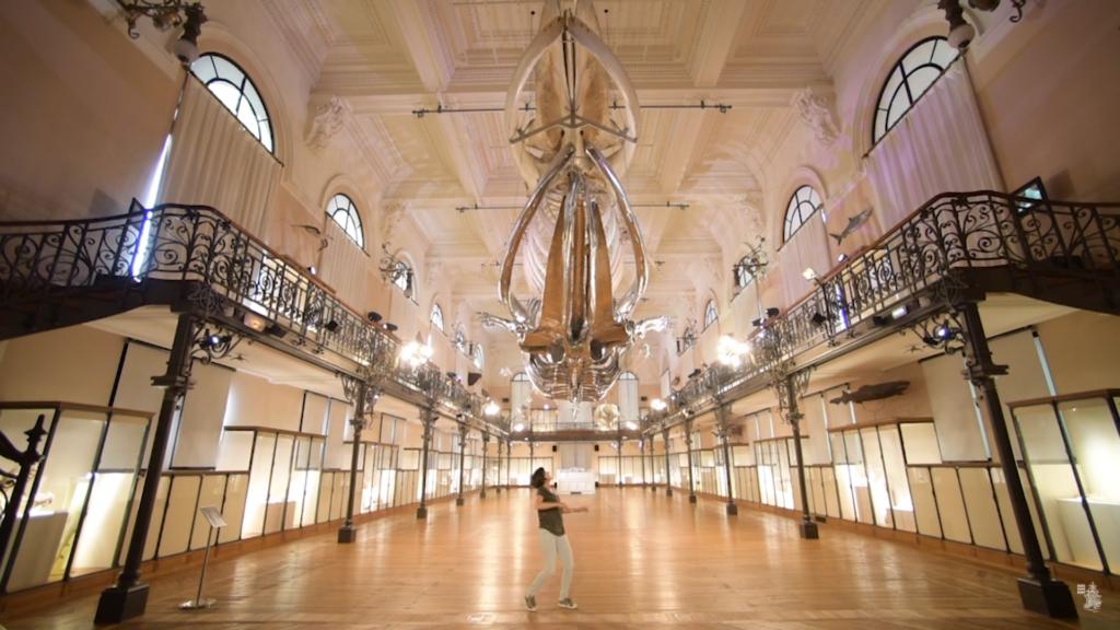 Salle de la Baleine