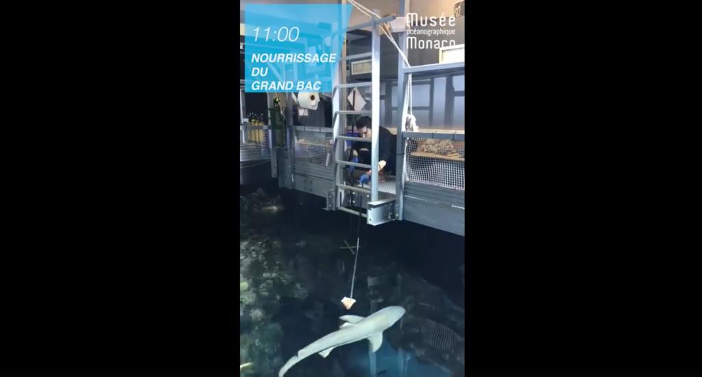 Bassin des requins au musée océanographique de Monaco