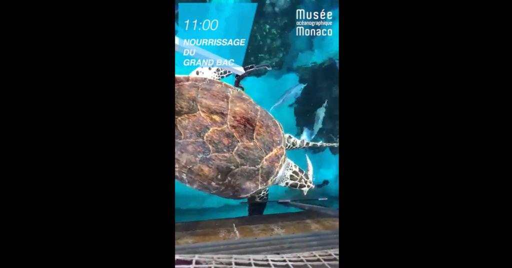 Bassin où évolue une tortue