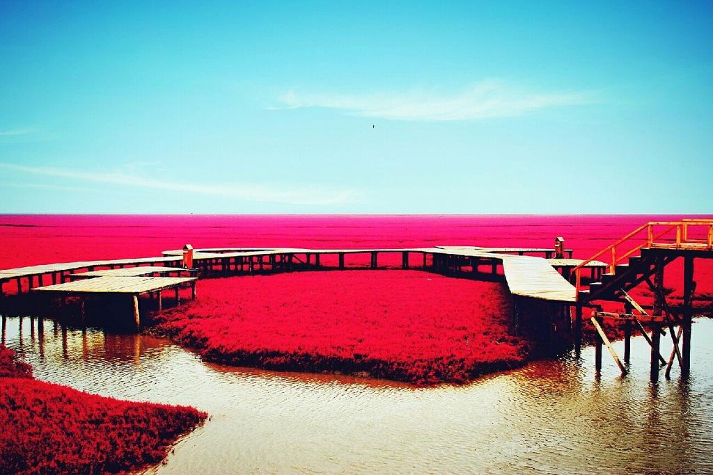 Plage rouge de Panjin
