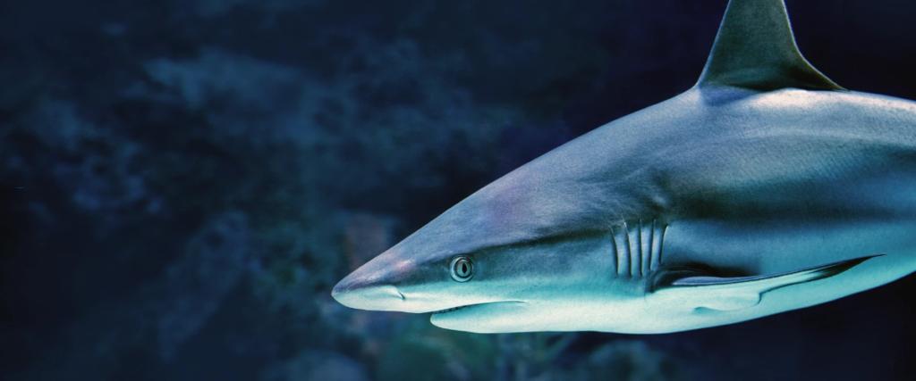 Requin au musée océanographique de Monaco