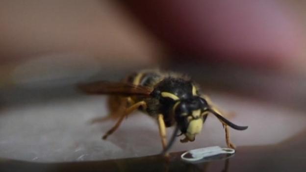 Masque miniature pour insectes