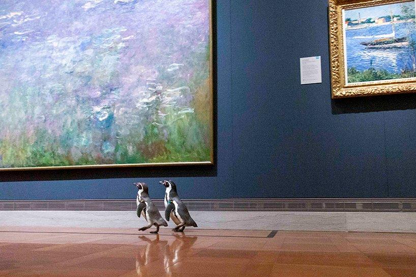 Manchots visitant le musée Nelson-Atkins à Kansas-City