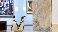 Manchots musee nelson-atkins kansas-city