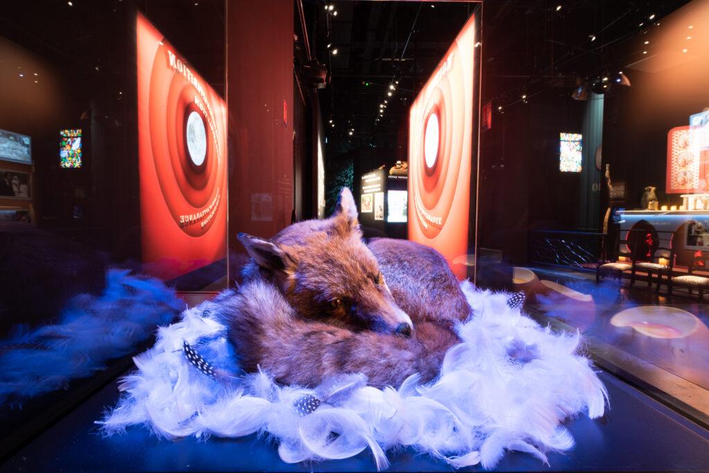 Exposition « L'univers à l'envers, Plonk et Replonk® » au musée des Confluences