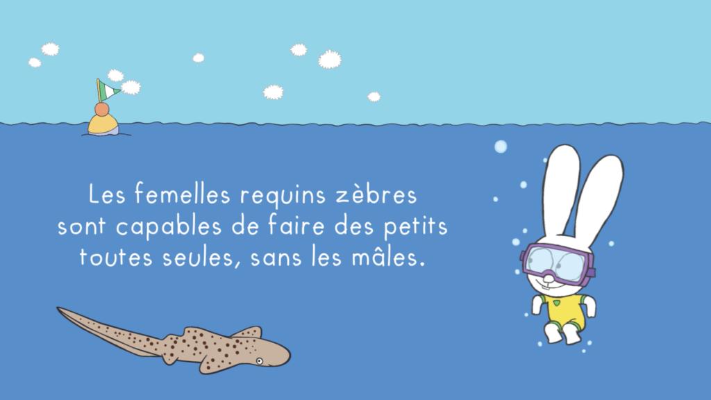 Simon, même pas peur des requins !