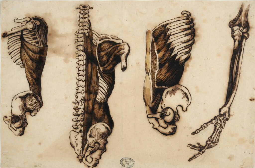 Exposition le cabaret du néant-Théodore Géricault, anatomie de l'homme, 1812