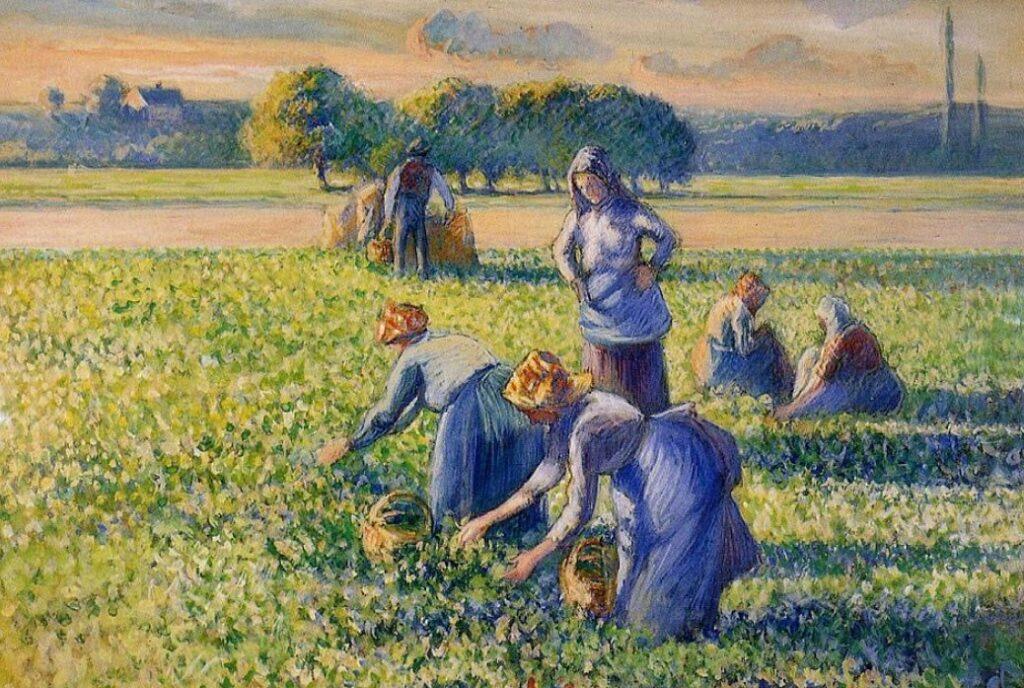 Camille Pissarro, La cueillette des pois, 1887