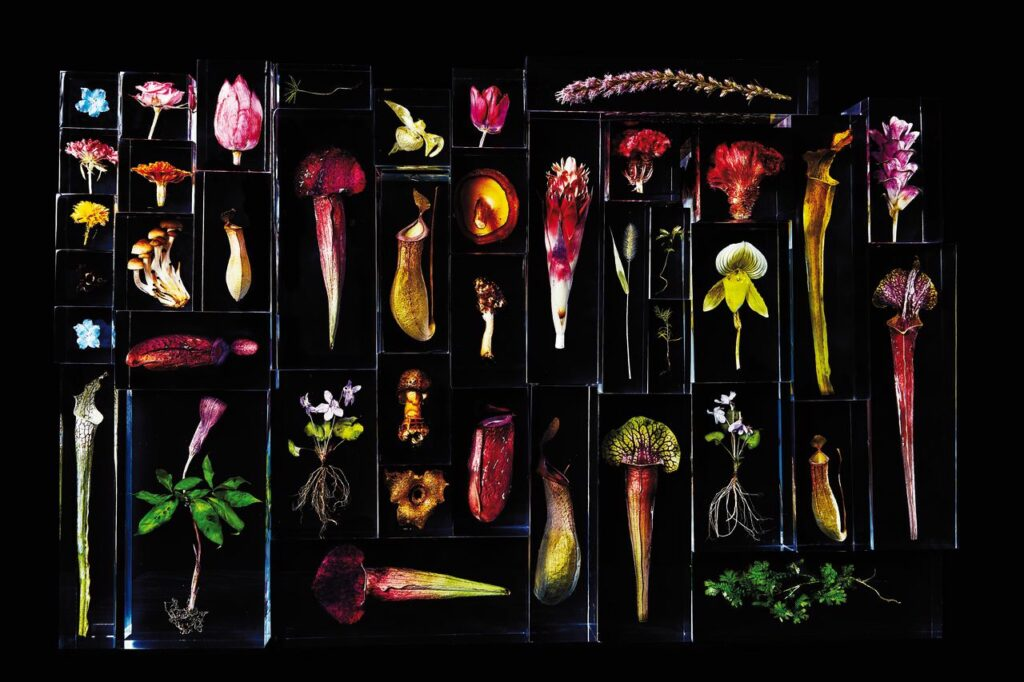 Makoto Azuma, Block flowers, 2020