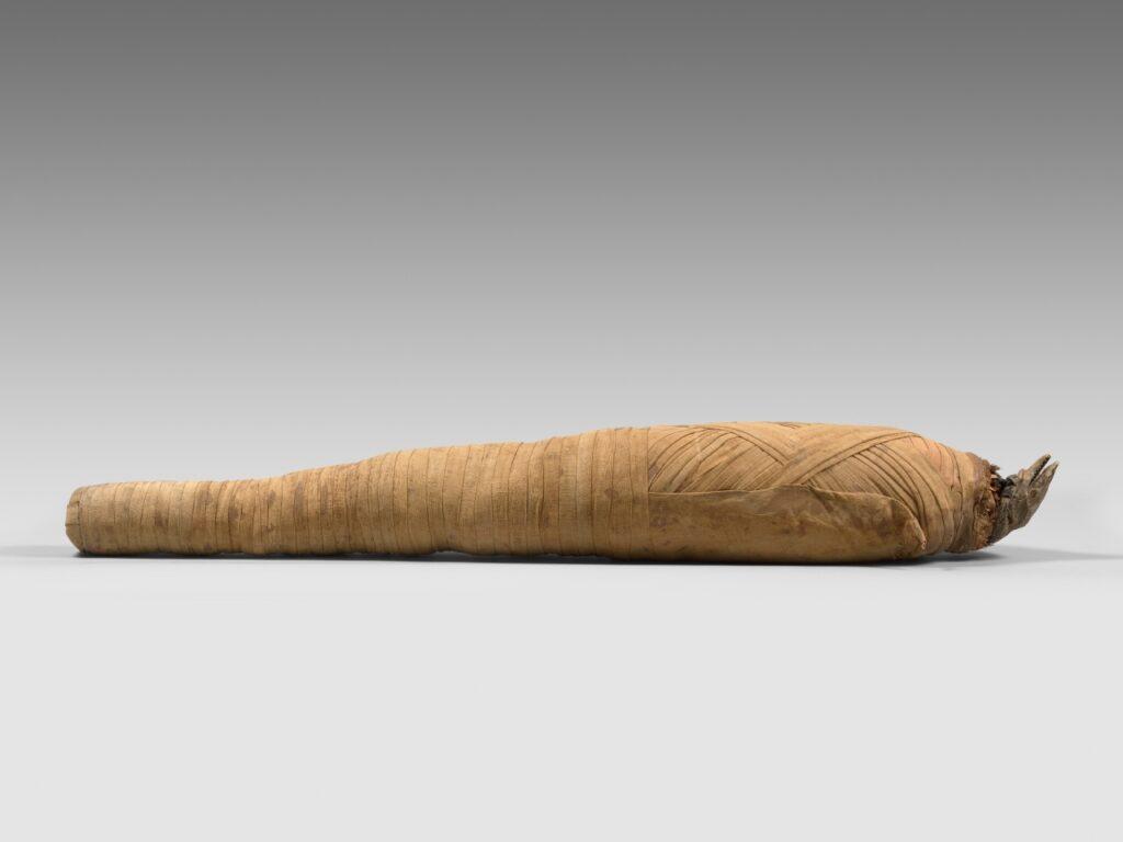 Momie de Varan du Nil, époque ptolémaïque