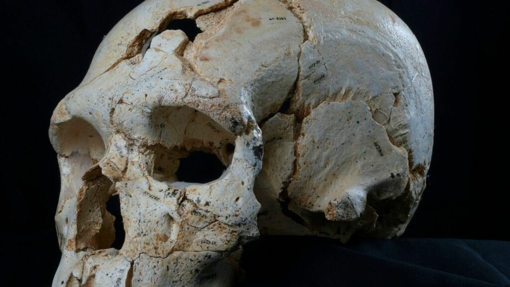 Le crâne retrouvé dans les fouilles