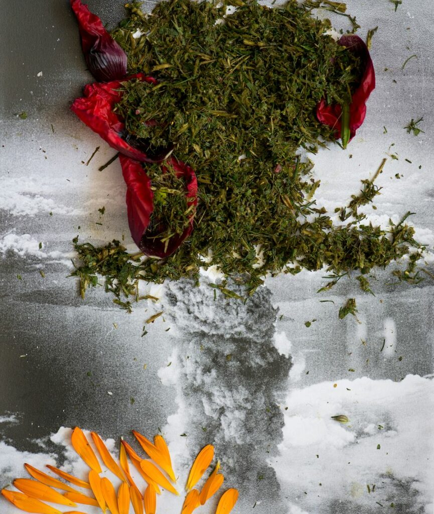 Laurence Aëgerter, Helichrysum italicum i.a. - Nagasaki, Japan, de la série Healing Plants for Hurt Landscapes, 2015