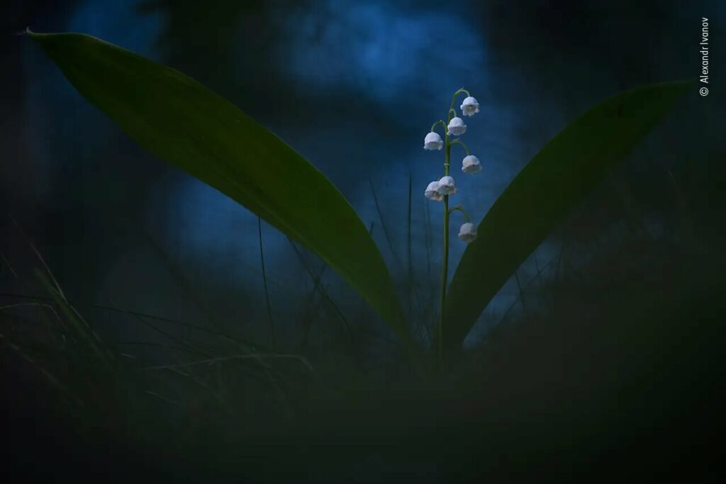 The Twilight Bells