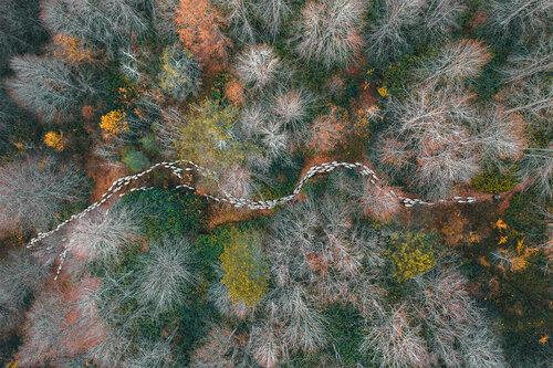 """1er prix """"Nature"""" (Arbres et Forêts) : Chemin forestier"""