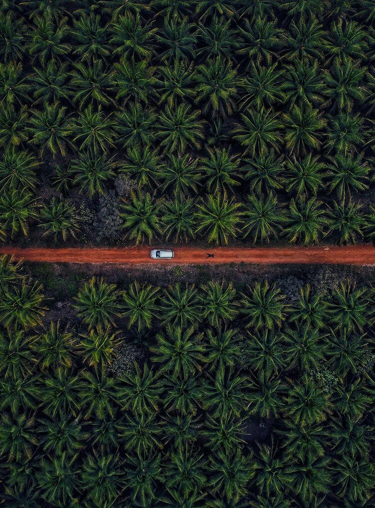 """4ème prix """"Nature"""" (Arbres et forêts) : Solitude dans les bois"""
