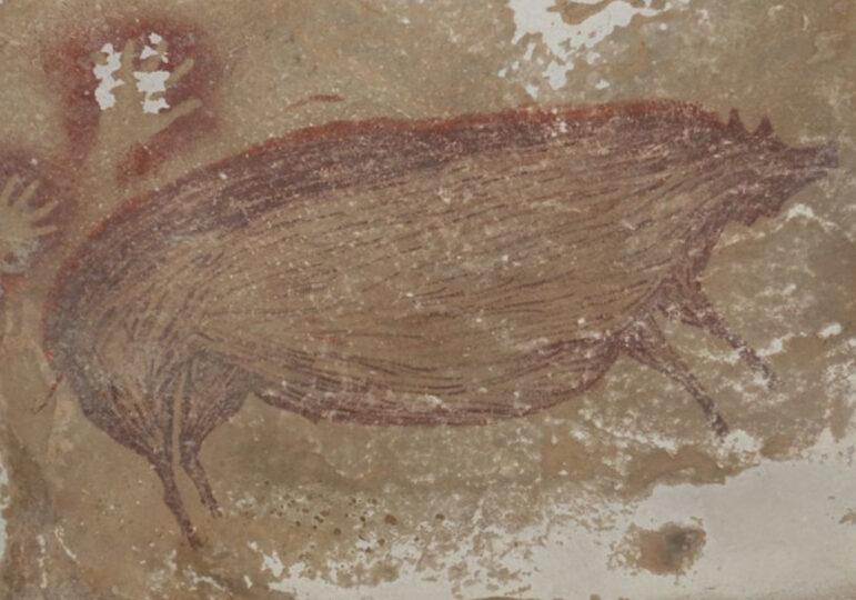 Cochon verruqueux, Indonésie, env 45 500 av. J.-C