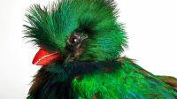 Exposition oiseau rare musée des confluences