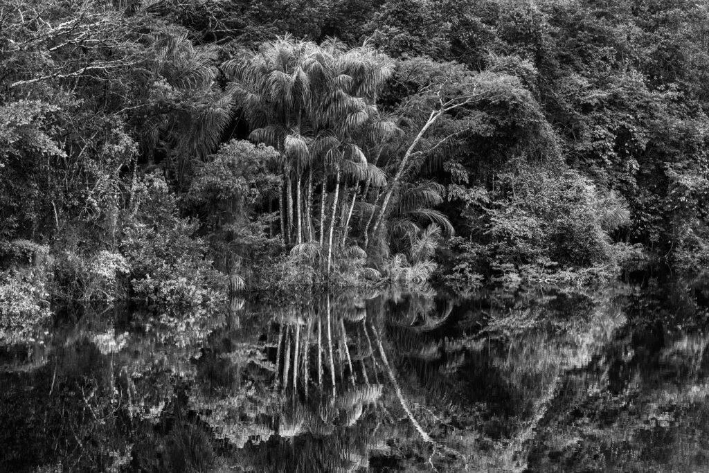 Sebastiao Salgado, Rio Jaú (Etat d'Amazonas, Brésil) 2019