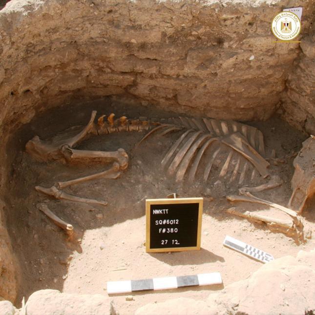 Squelette retrouvé lors des fouilles