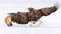 bird-photographer-2021-oiseaux-1