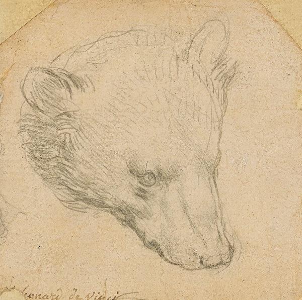 Léonard de Vinci, Tête d'ours