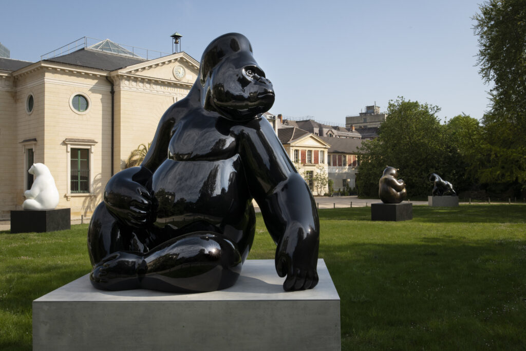 Le Dominant - Gorille de l'Ouest