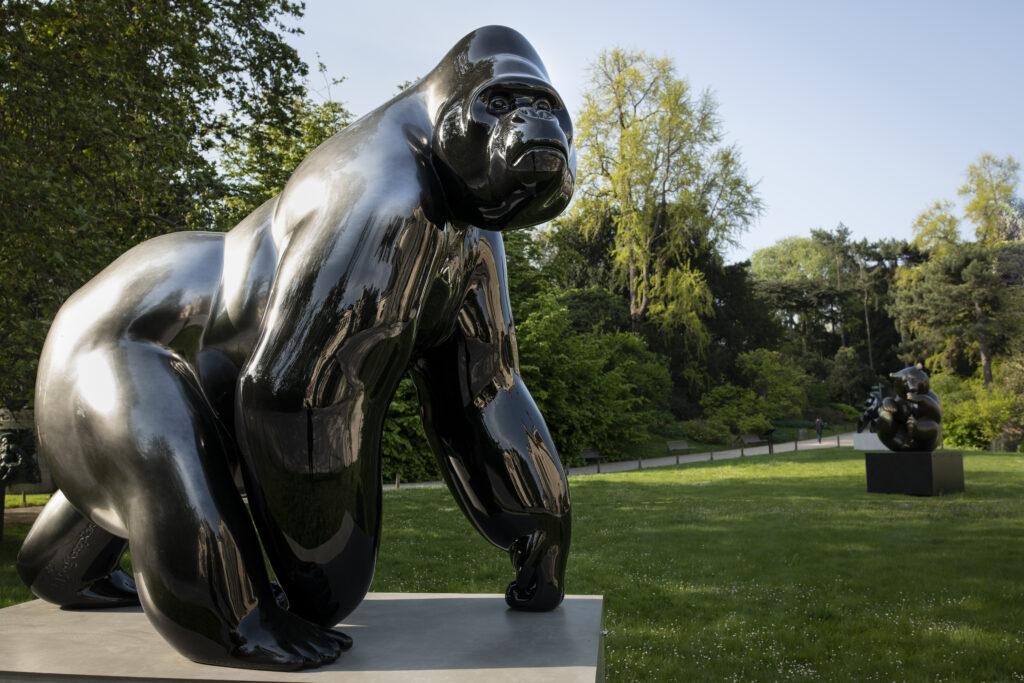 Le dos argenté - Gorille de l'Ouest