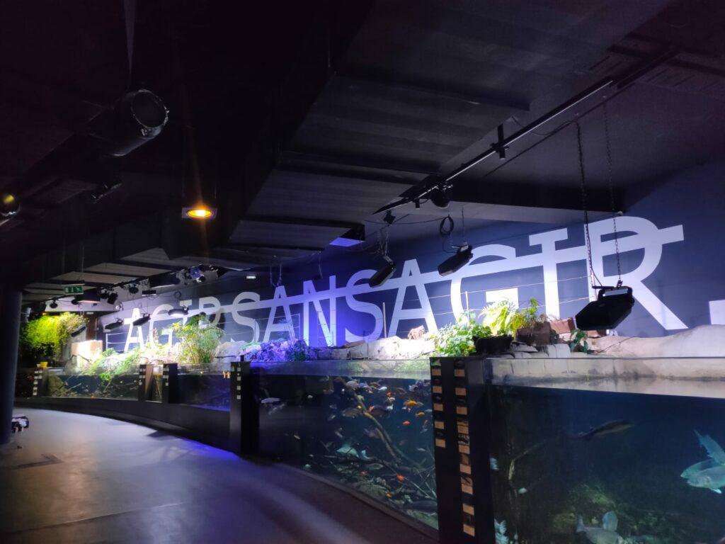 Vue de l'installation de l'exposition Immens(lim)ité, Rero, Aquarium de Paris (3)