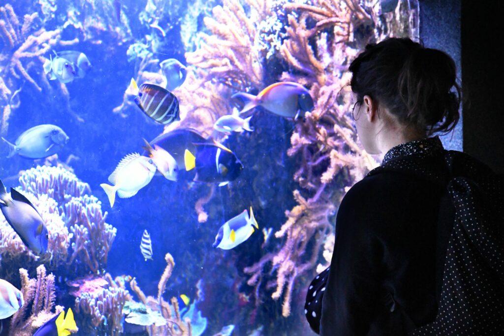 Aquarium Tropical - Palais de la Porte Dorée