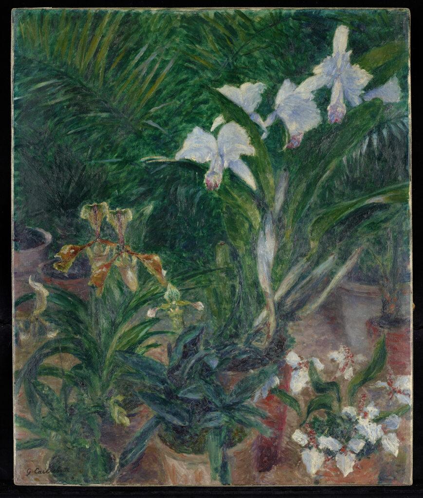 Gustave Caillebotte, Orchidées dans la serre du Petit Gennevilliers (1893)