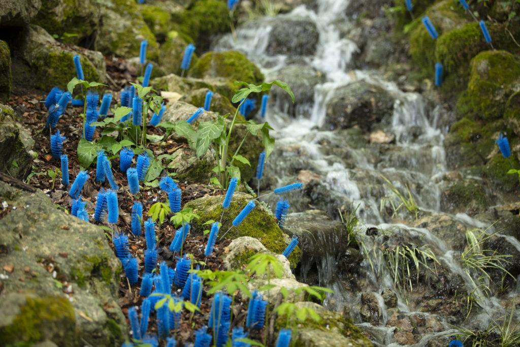 Festival des jardins, A rebrousse poil, Alexis Tricoire