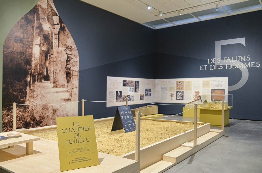 Vue de l'exposition Au temps des Faluns, Musée des Beaux Arts d'Angers (1)