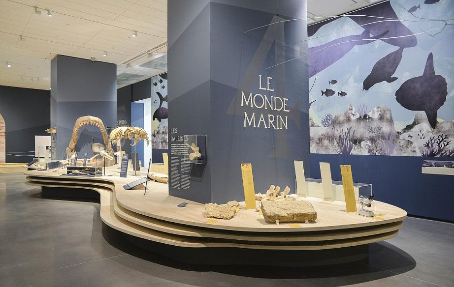 Vue de l'exposition Au temps des Faluns, Musée des Beaux Arts d'Angers (5)