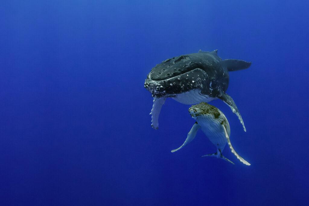 Brian Skerry, Le secret des baleines