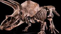 big-john-tricératops